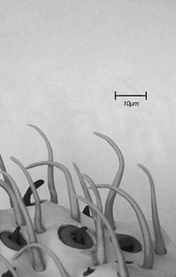 RM Francis 'Microtopies', D013